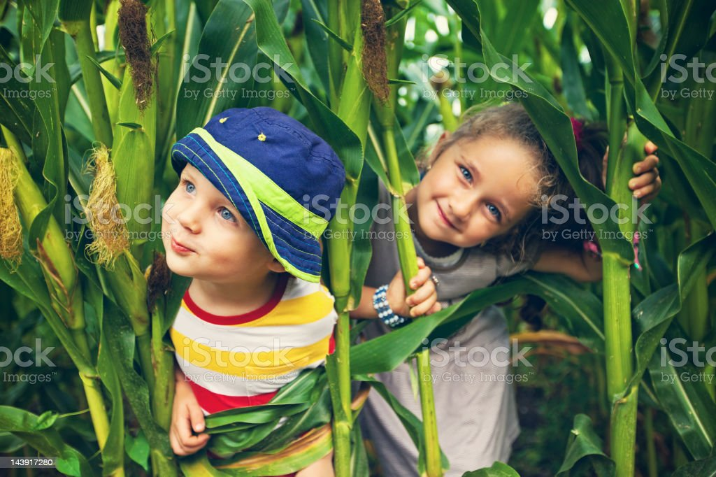 Children play in the corn field royalty-free stock photo