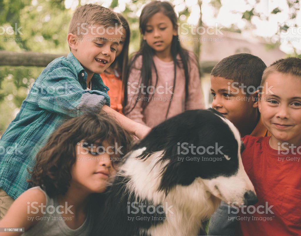 Children playing in the park with a Border Collie dog stock photo