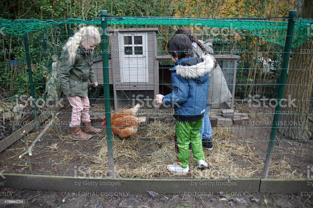 Children take care for the chickens stock photo