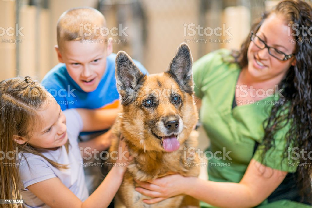 Children Volunteering at an Animal Shelter stock photo
