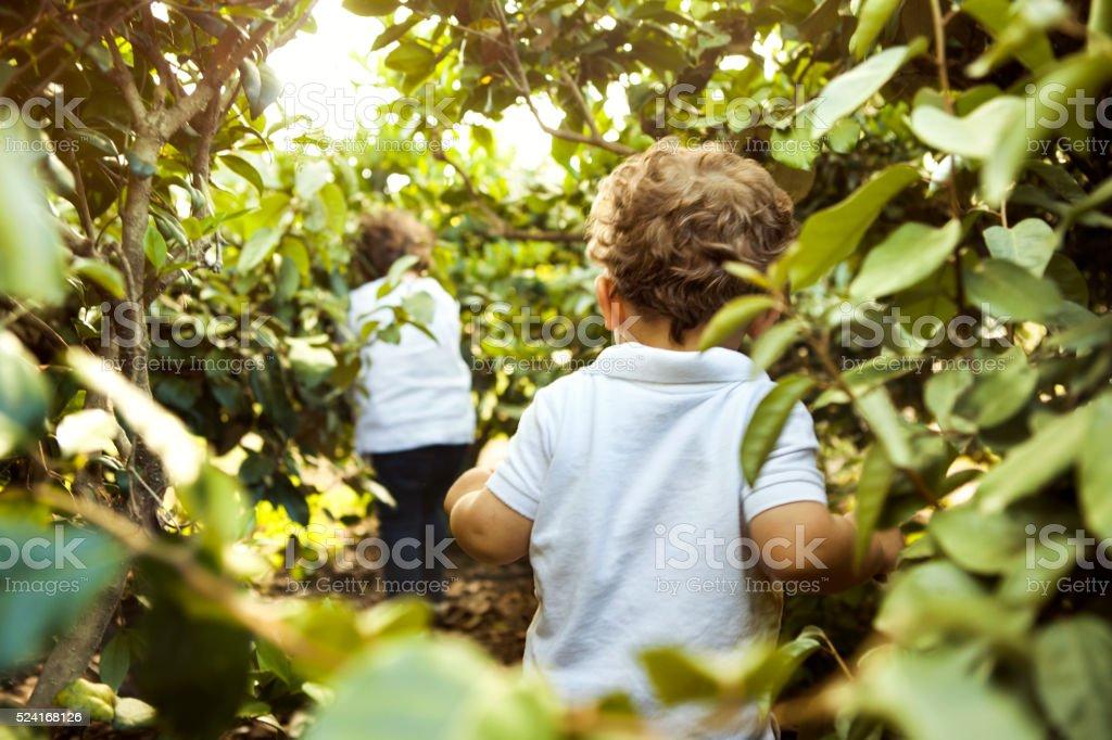 Children walking in woods stock photo