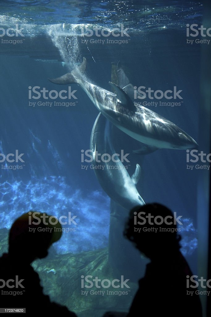 Children Watching Dolphins at Aquarium stock photo