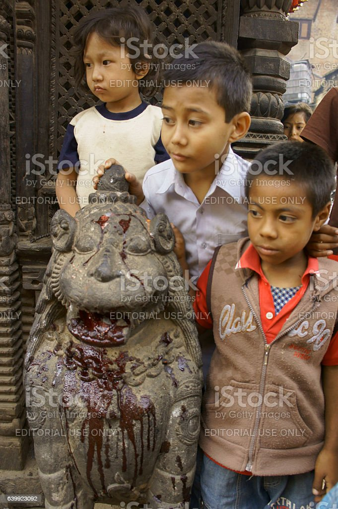 children watching killing of a buffalo as sacrifice for goddess stock photo