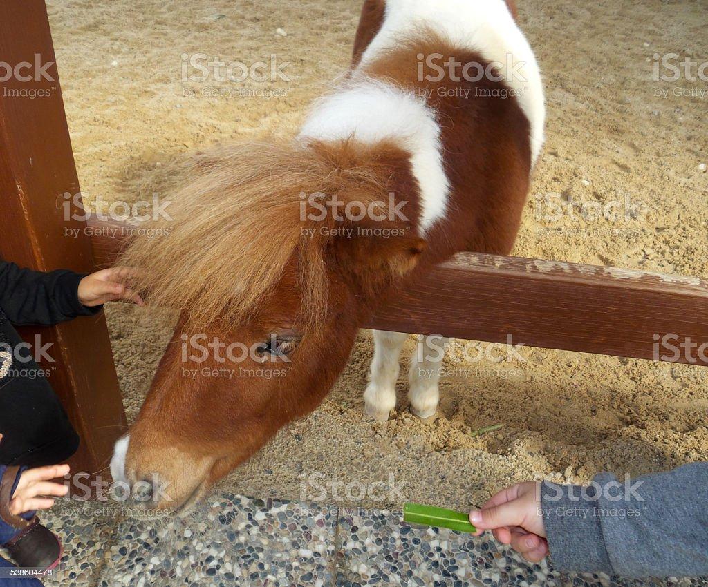 Children with pony stock photo