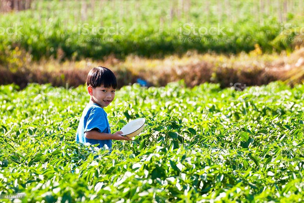 Dzieci, działa i gra w parku z Zielona papryka zbiór zdjęć royalty-free