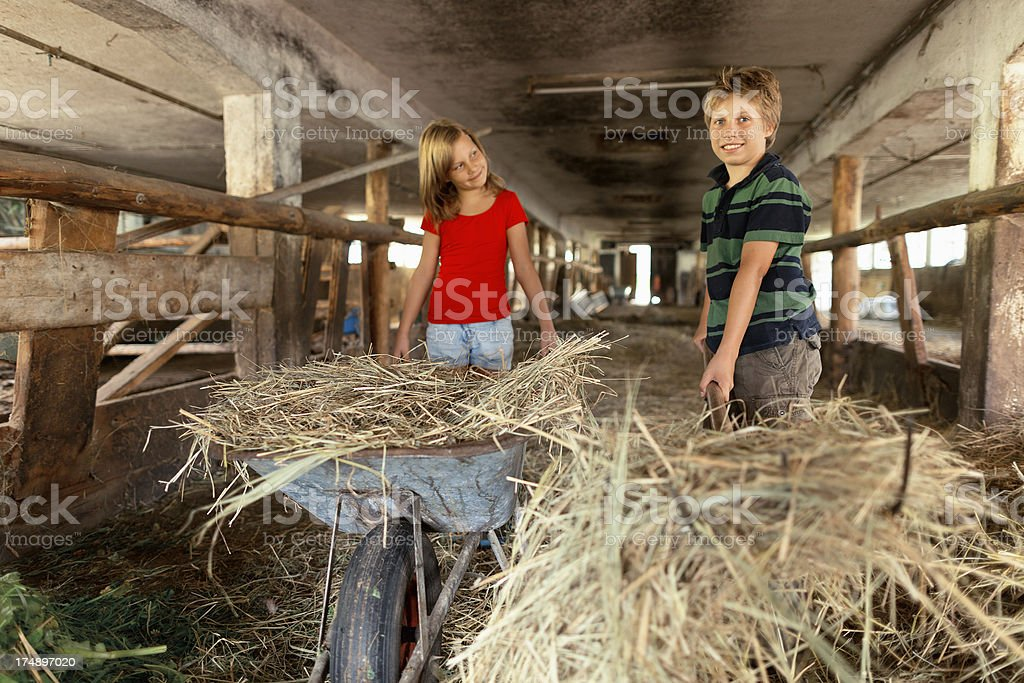 children working in stable royalty-free stock photo