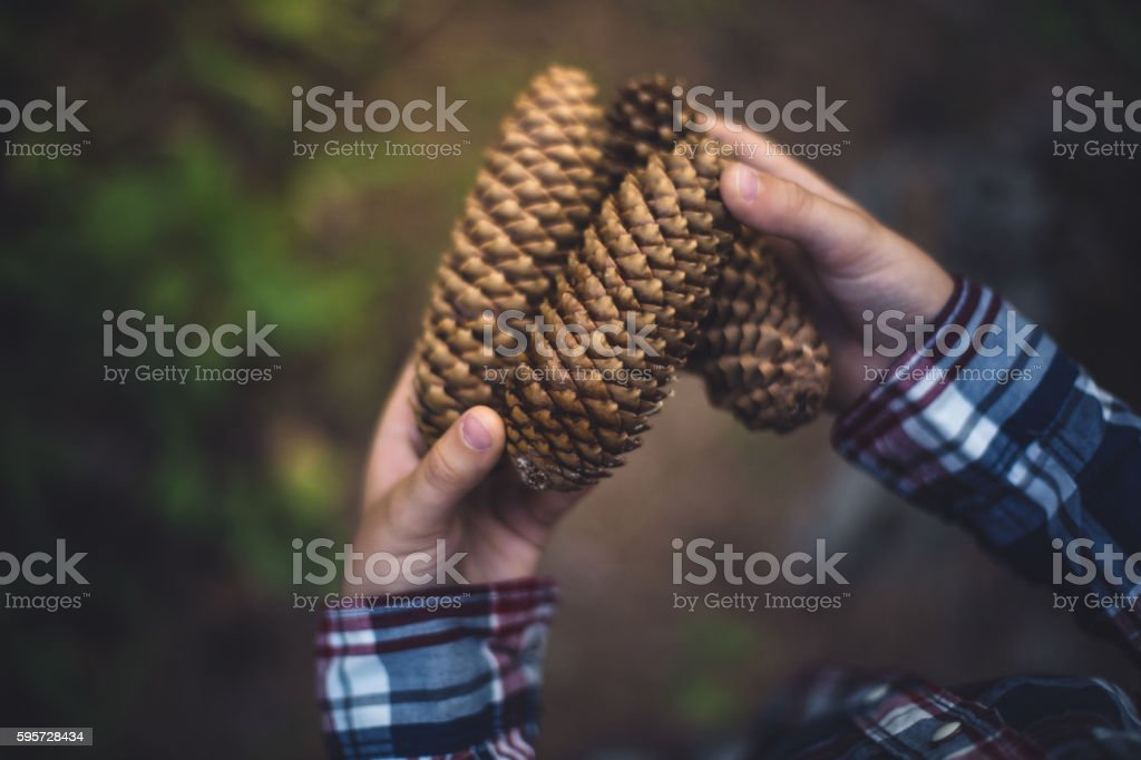 Children's hands with three pine cones stock photo