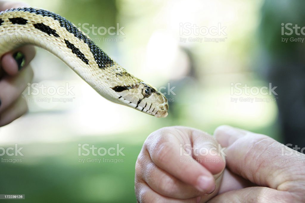 Childs Hand and Snake Closeup stock photo