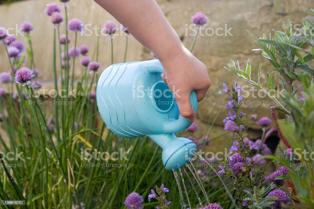 Childs hand with watering can royalty-free stock photo