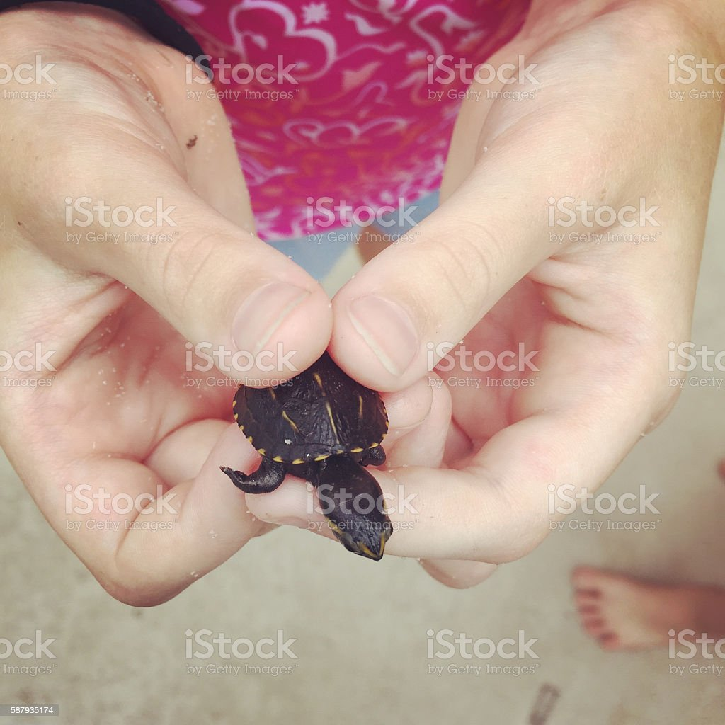 Child's Hands Holding Tiny Baby Turtle - Mobile Stock stock photo