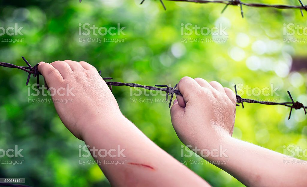 Child's hands on a rusty barbed wire stock photo