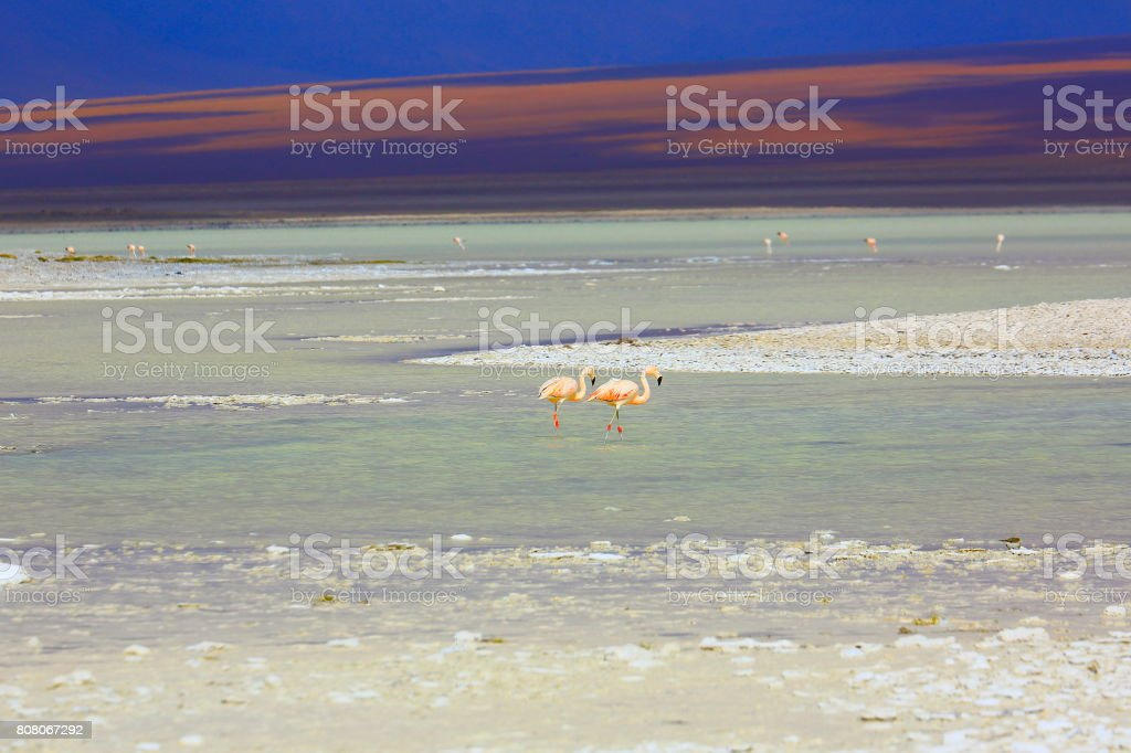 Chilean Flamingos on Idyllic Salar de Tara blue lagoon, salt marsh - Volcanoes and Idyllic Atacama Desert altiplano, volcanic landscape panorama – San Pedro de Atacama, Chile, Bolívia and Argentina border stock photo