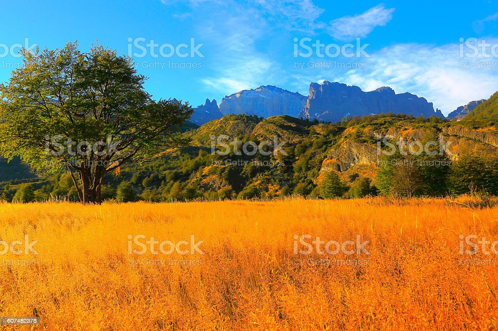 Chilean Patagonia steppe pampa meadows landscape sunrise, Torres Del Paine stock photo