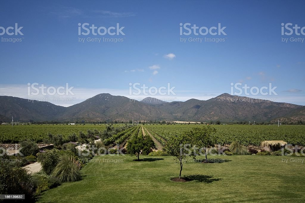 Chilean vineyard at foot of mountains under a blue sky stock photo