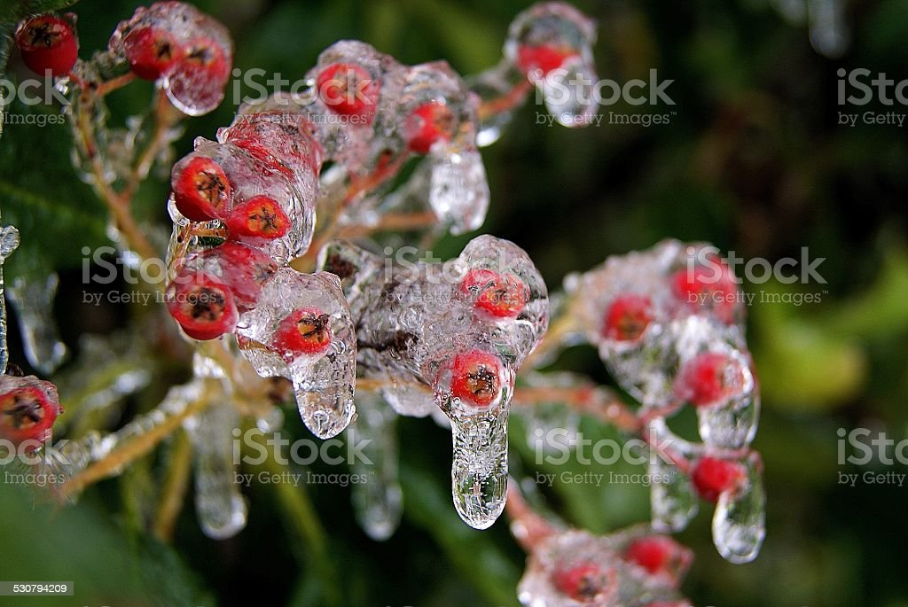 Chilled Berries royalty-free stock photo
