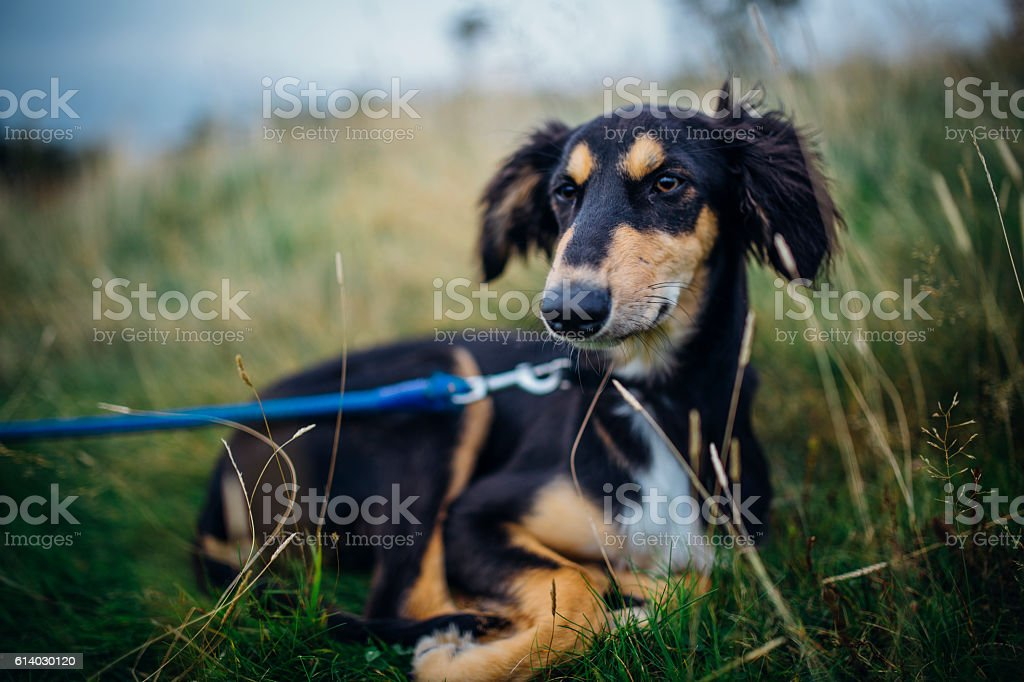 Chilled Out Dog stock photo