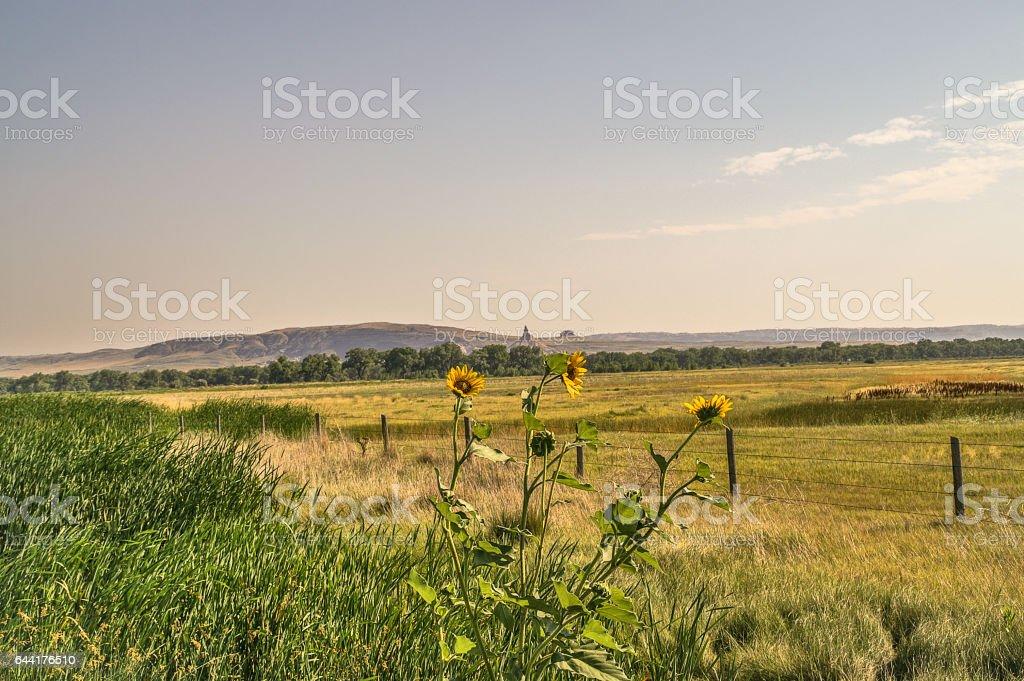 Chimney Rock Between Sunflowers stock photo