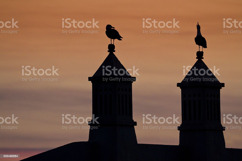 Chimneys and seagulls at sunset stock photo