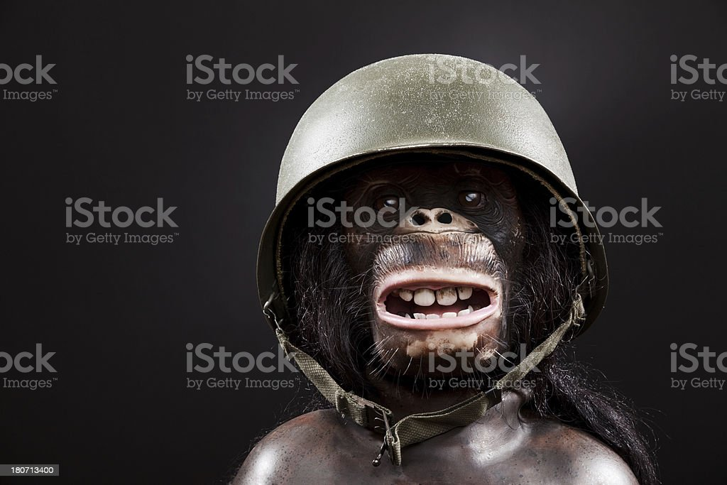 Chimpanzee with Military Hat royalty-free stock photo