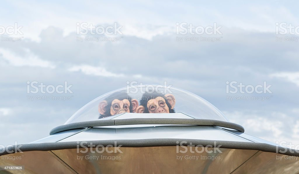 Chimps From Space royalty-free stock photo
