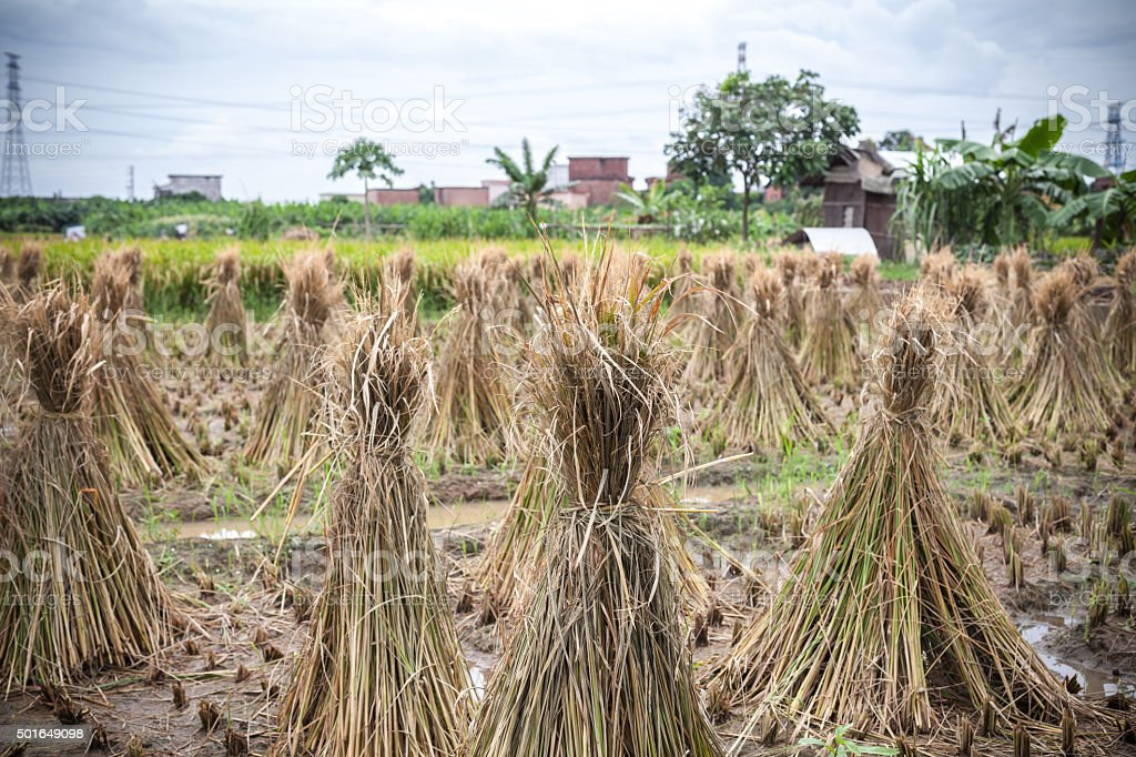 China cultivated fields stock photo