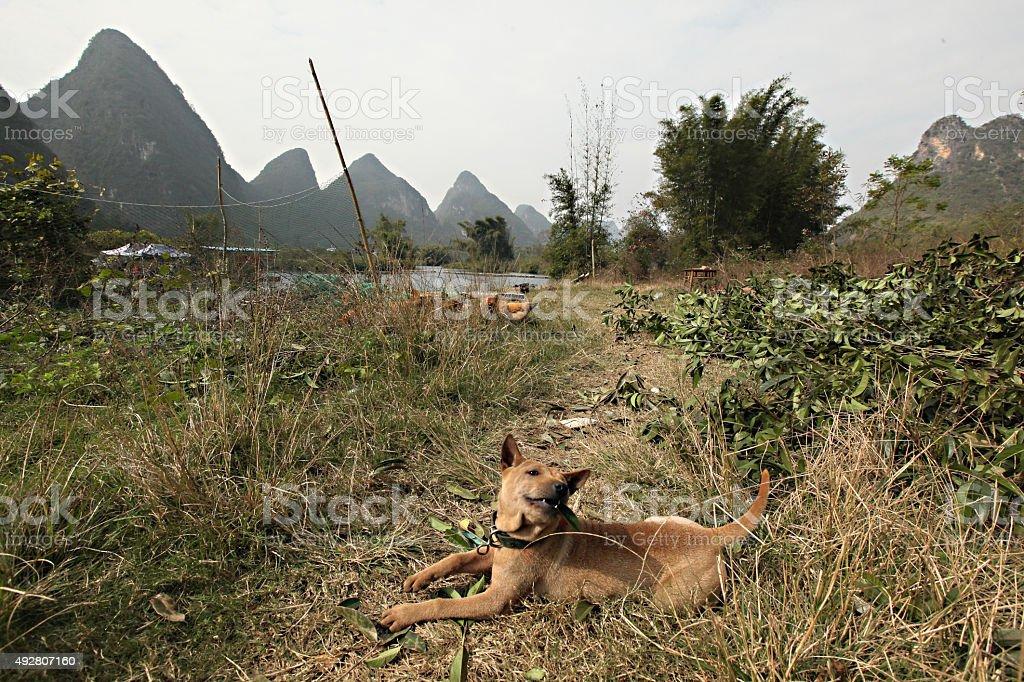 china dog stock photo