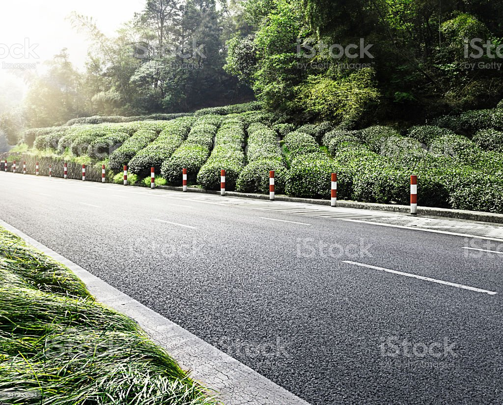 China's tea garden stock photo