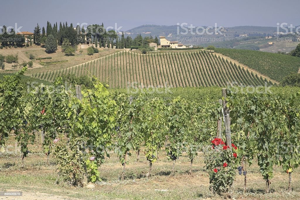 Chinati Vineyard in Front and Back stock photo