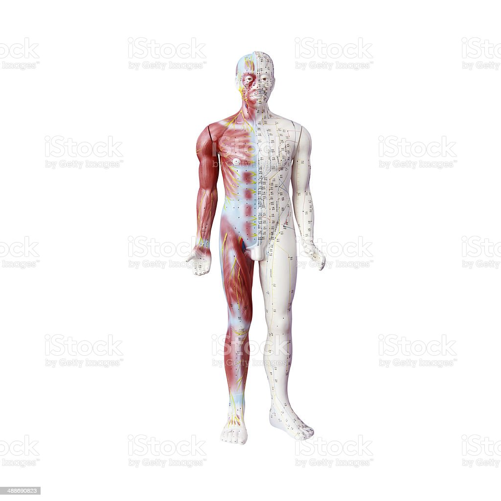 Chinese acupuncture dummy.Clipping path. stock photo