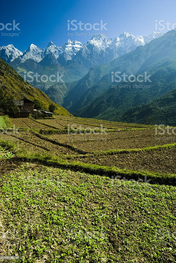 Chinese Agriculture in Tiger Leaping Gorge royalty-free stock photo
