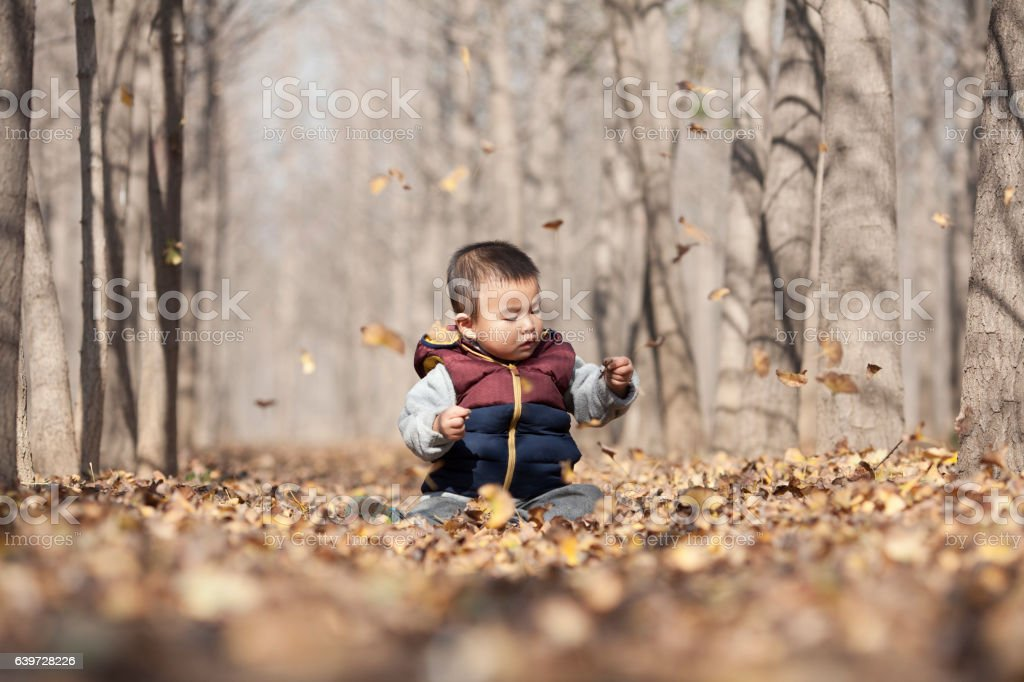Chinese baby boy playing in ginkgo woods stock photo