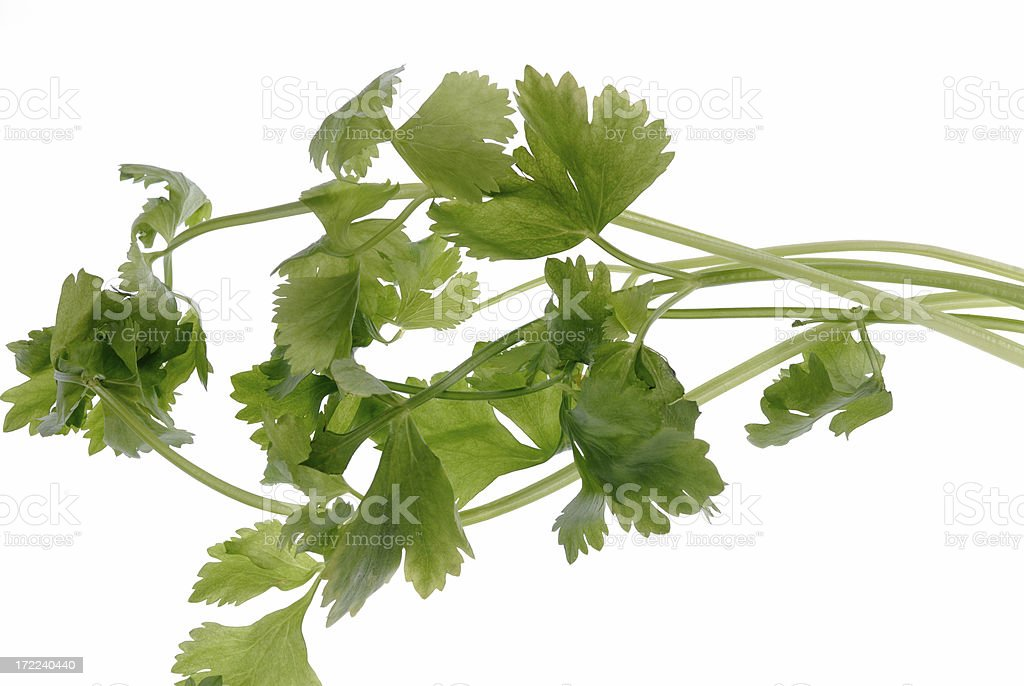 Chinese Celery stock photo