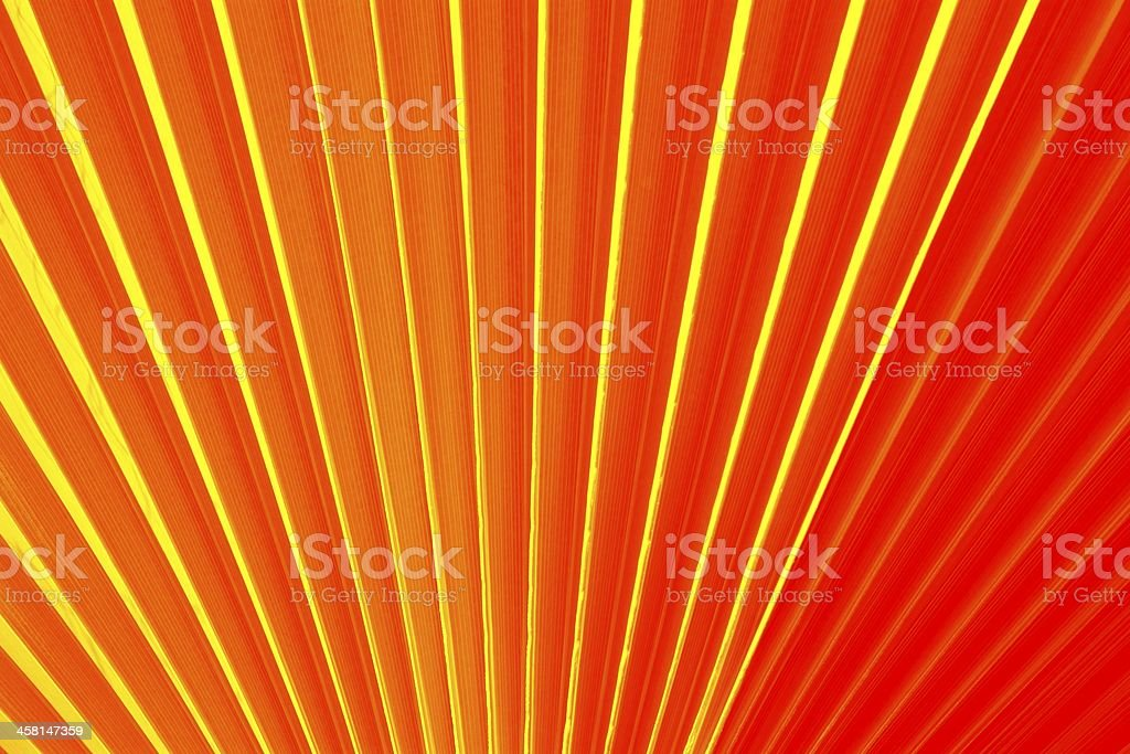 Chinese fan palm royalty-free stock photo