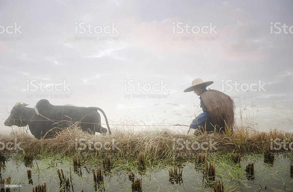 Chinese Farmer Cultuvating Rice Paddy, Ping an, Longsheng, China royalty-free stock photo