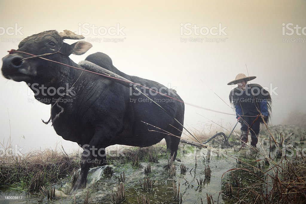 Chinese Farmer, Pingan, China stock photo