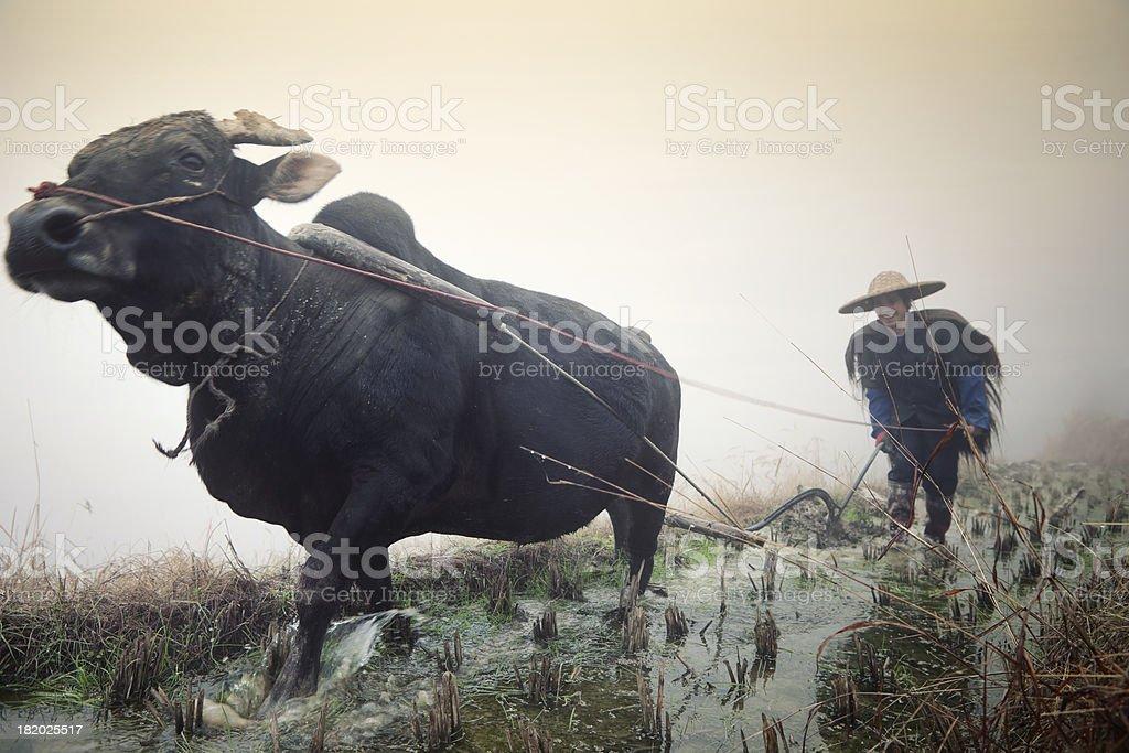 Chinese Farmer, Pingan, China stock photo