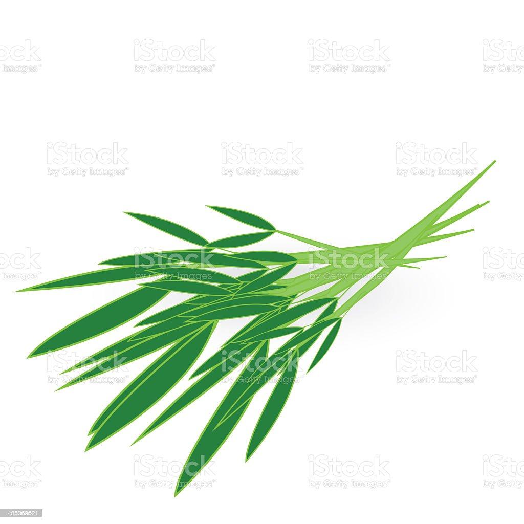 chinese kangkong isolated on white background stock photo