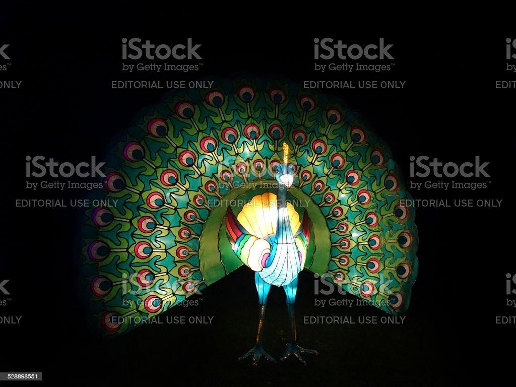 Chinese Lantern Festival lights image, illuminated peacock bird / peafowl / fanned-tail-feathers stock photo