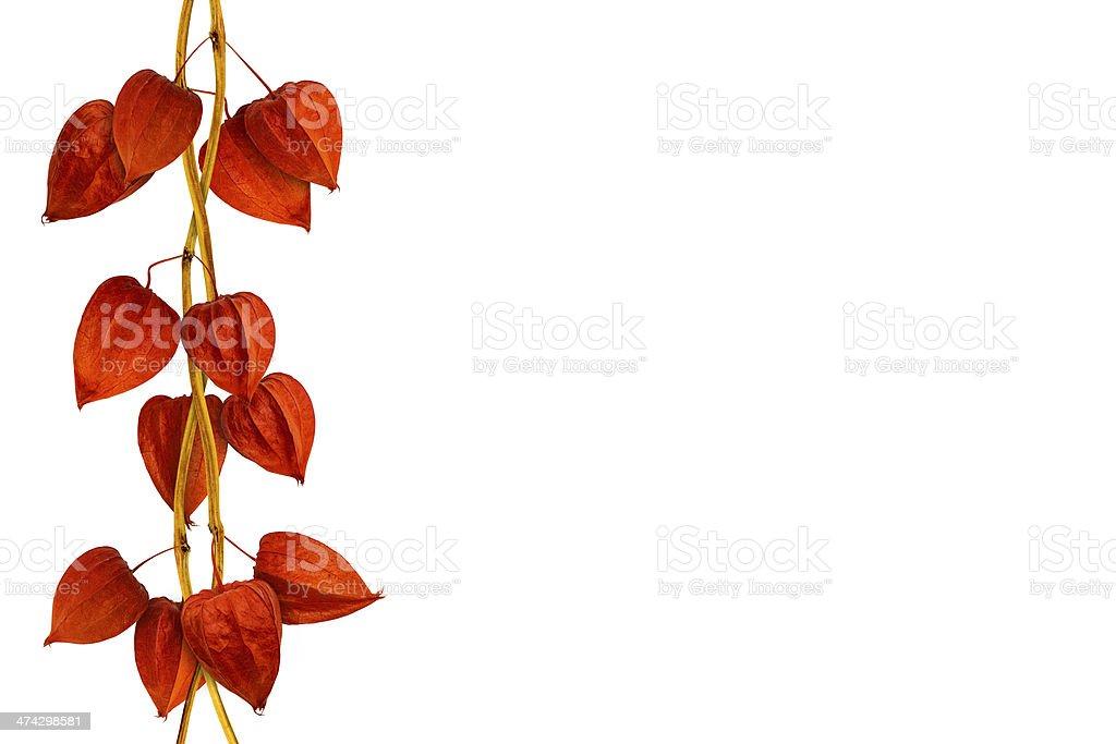 Chinese lantern isolated stock photo