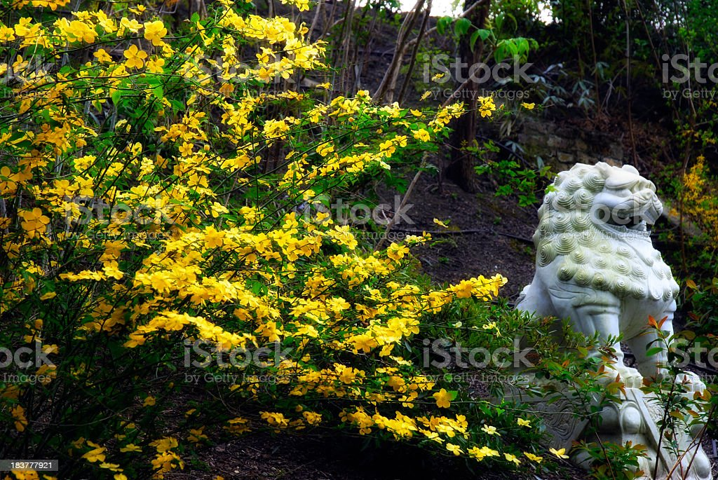 Chinese lion with gorse royalty-free stock photo