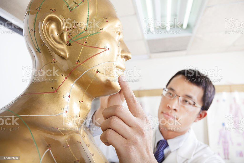 chinese medicine doctor teaching  Acupoint on human model stock photo