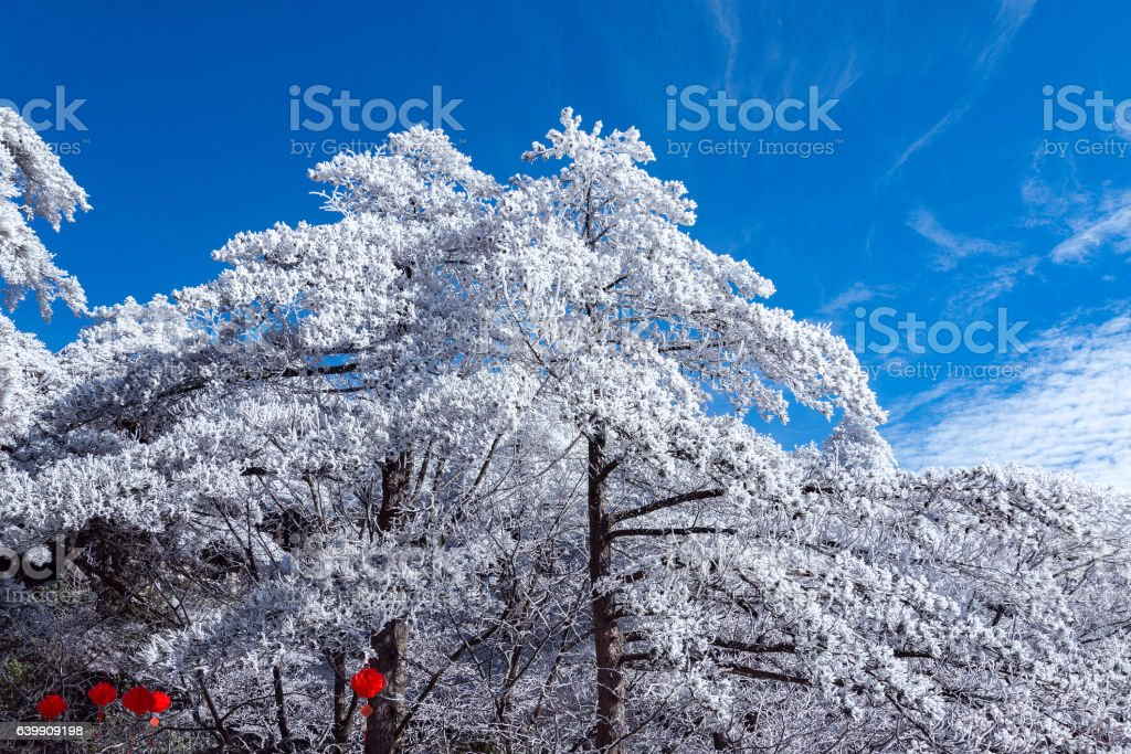 Chinese New year background in Huangshan National park. stock photo