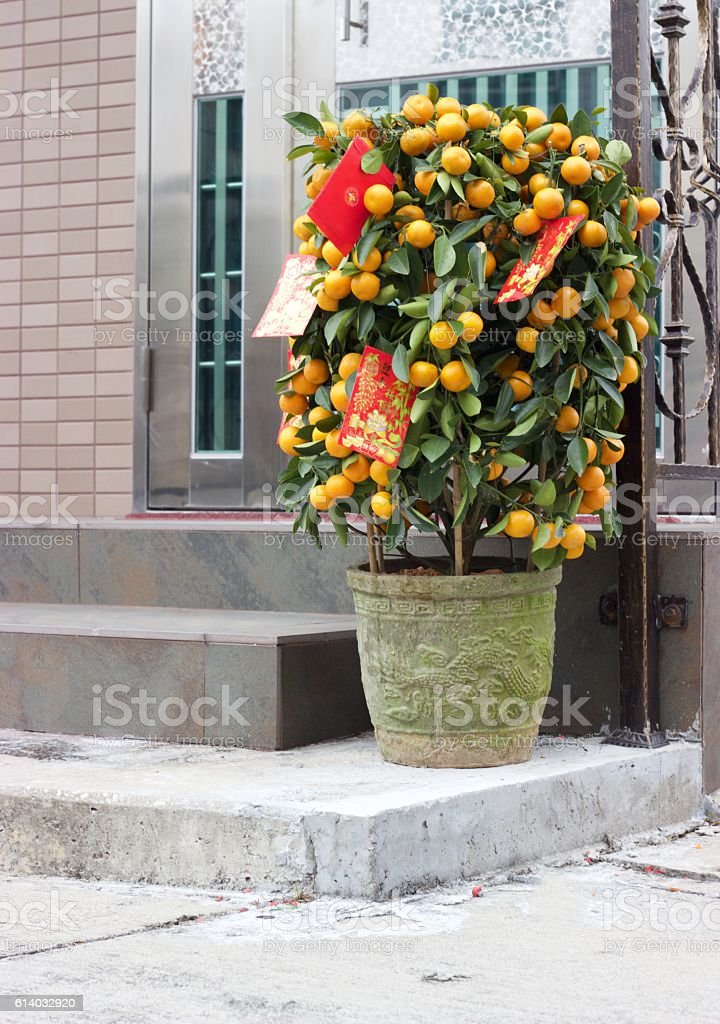 Chinese New Year mandarin orange bush in Hong Kong doorway stock photo