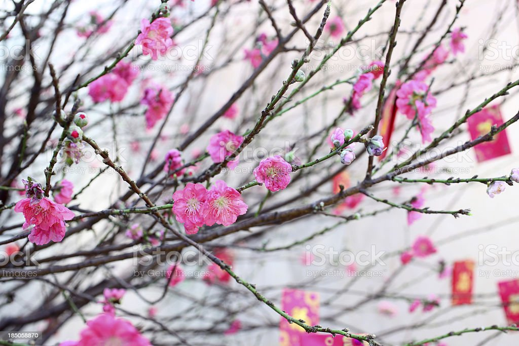 Chinese New Year Peach Blossom stock photo