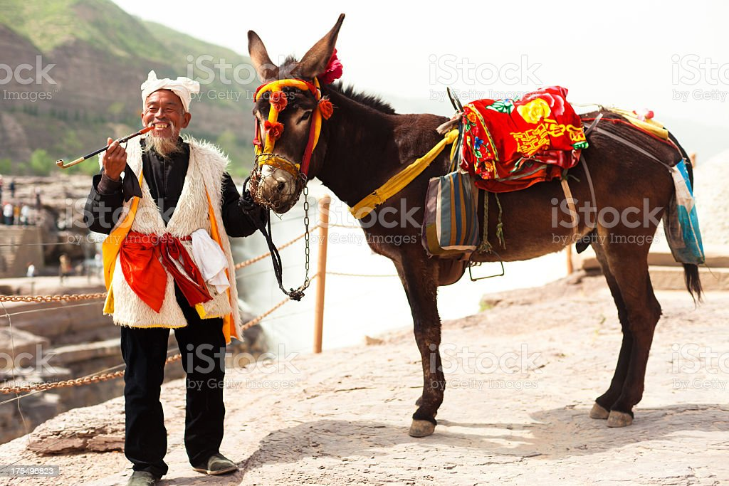 Chinese old man with his donkey royalty-free stock photo
