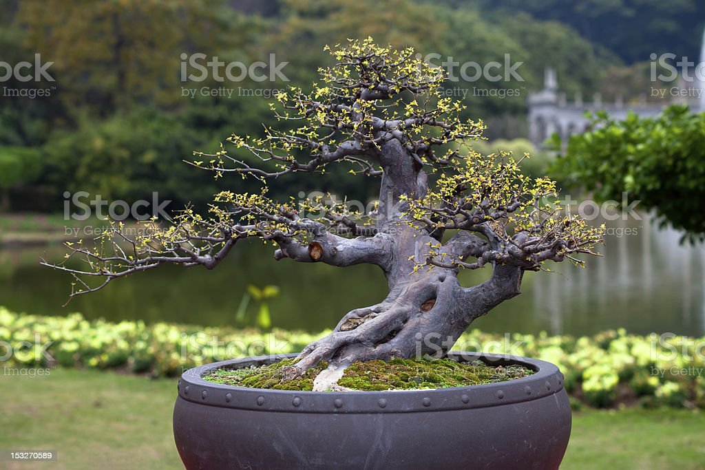 Chinese potted miniascape stock photo