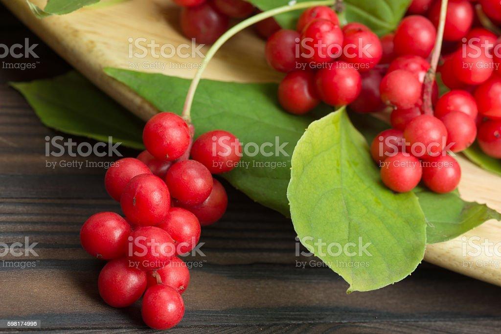 Chinese schizandra - red ripe berries stock photo
