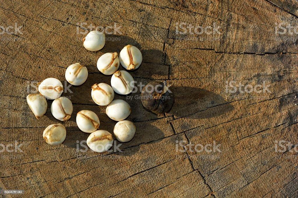 Chinese tallow tree seeds (scientific name: Sapium sebiferum) stock photo