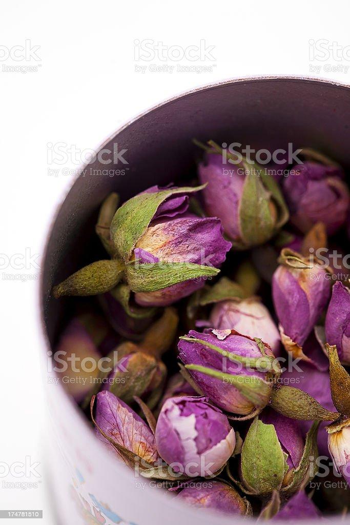 Chinese tea rose stock photo