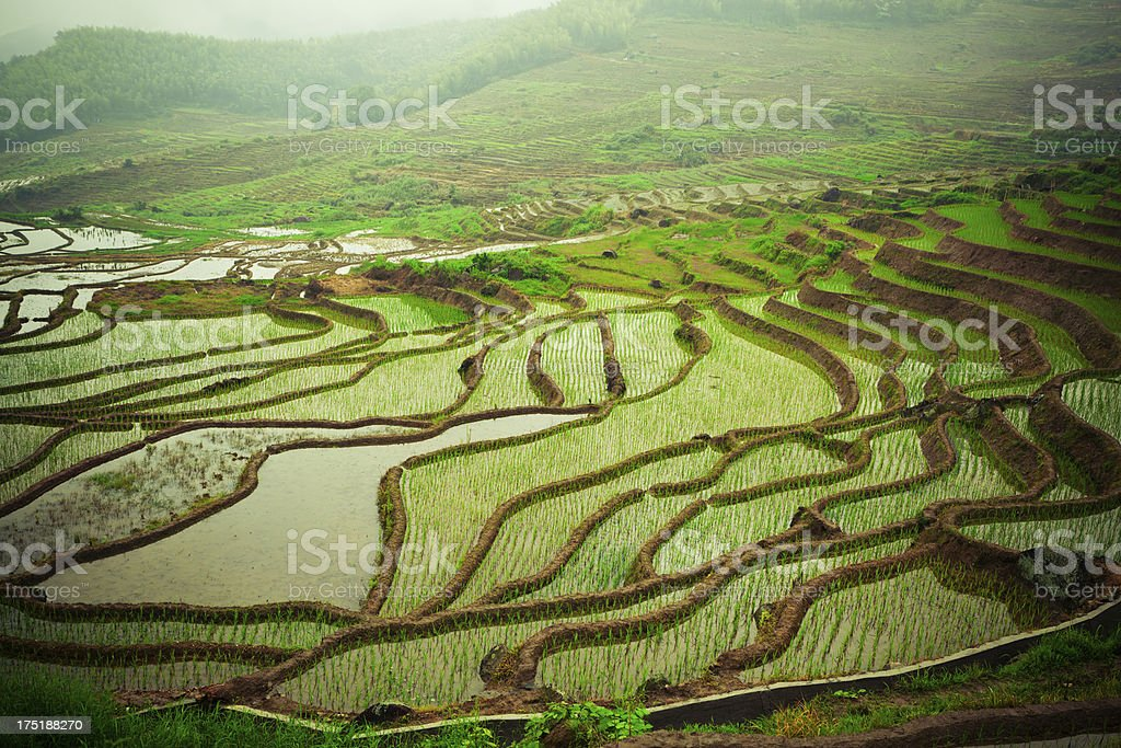 Chinese terraces stock photo